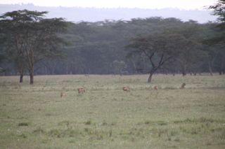 201108kenya - 20111024014