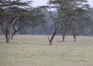 201108kenya - 20111024011