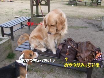 027_convert_20110209024934.jpg