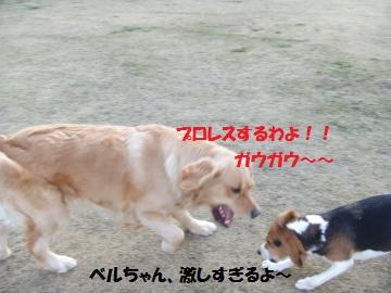 029_convert_20110219002657.jpg