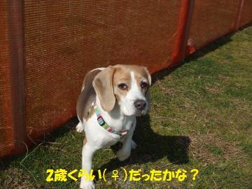 033_convert_20110228023112.jpg