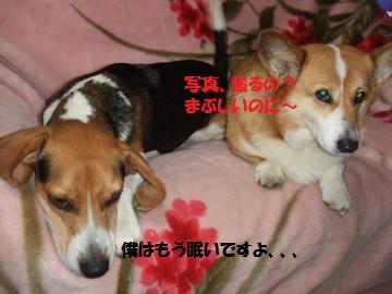 044_convert_20110219003123.jpg