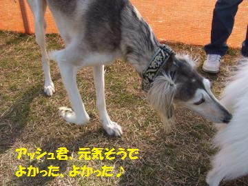 051_convert_20110302011555.jpg