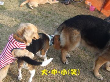 080_convert_20110302011005.jpg