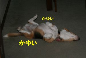 IMG_0662 (300x203)