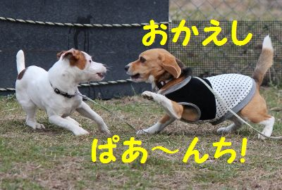 IMG_8180 (400x270)