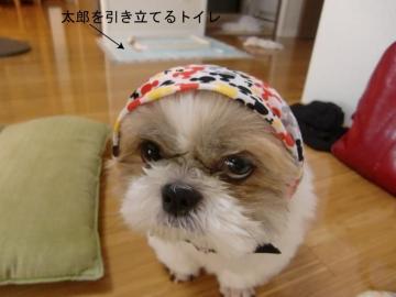CIMG8703_邱ィ髮・convert_20110725002110