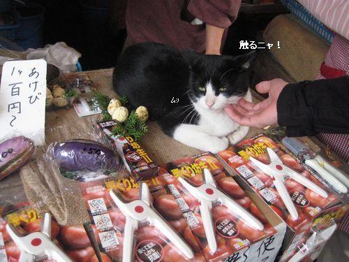 1栗屋さんの猫2