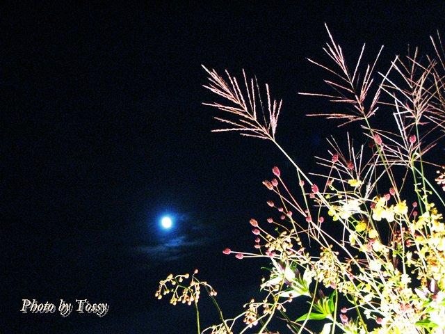 秋草と名月1
