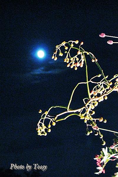 秋草と名月3