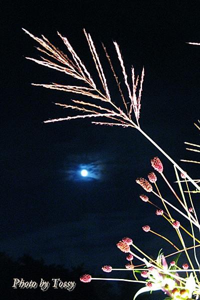 秋草と名月4