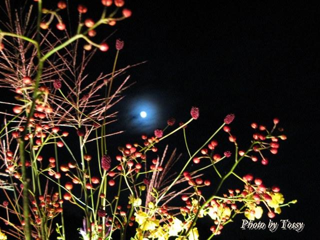 秋草と名月5