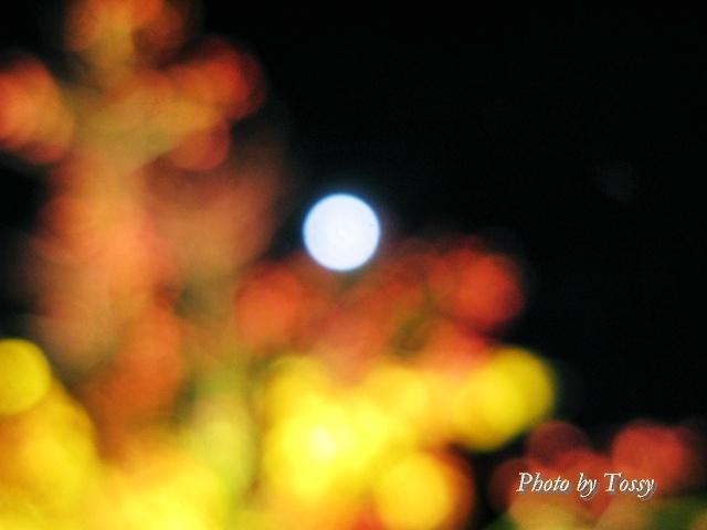 秋草と名月