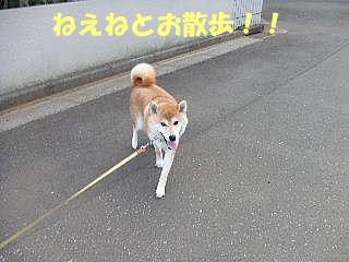 ねえねとお散歩