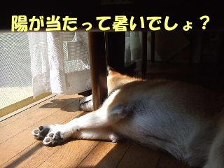 暑いでしょ