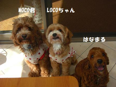 CIMG7151blog.jpg
