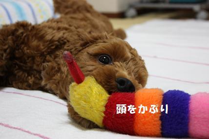IMG_1049blog.jpg