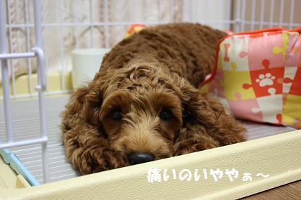 IMG_1310blog.jpg