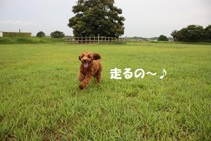 IMG_1678blog.jpg