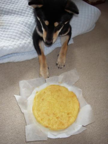 チーズケーキとおはな