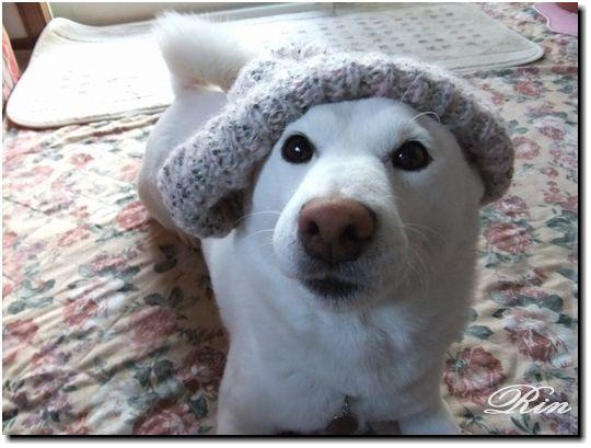 毛糸の帽子♪