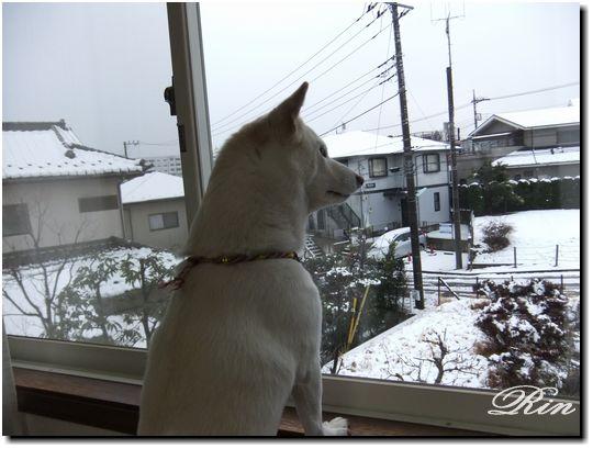 うわ~~雪だ~~