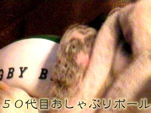 bull259.jpg