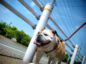 bulldog40.jpg