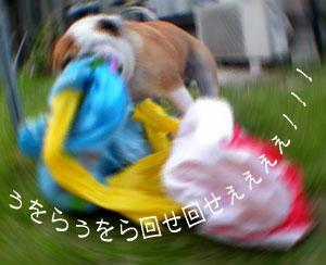 bulldog43.jpg