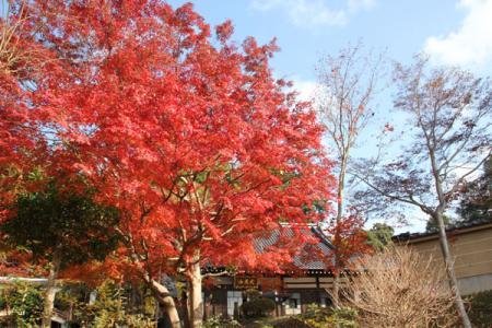 馬頭院の秋