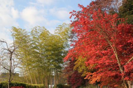 広重紅葉まつり