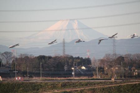川島町白鳥飛来地