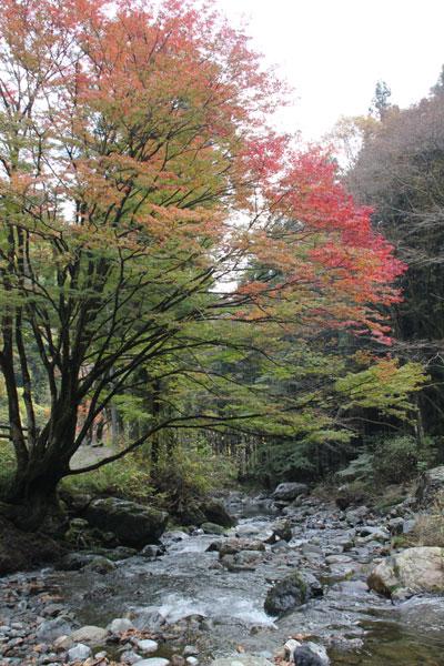 桐生川の秋