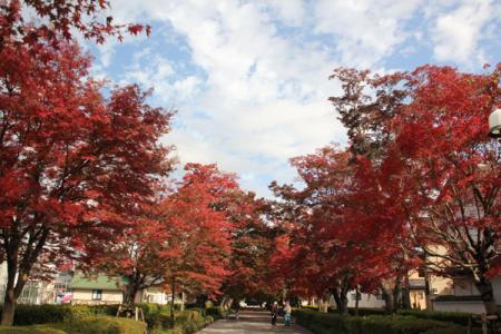 大山参道の秋