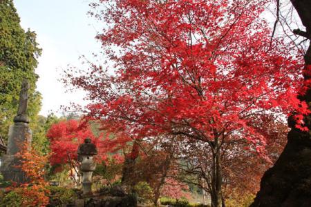 龍珠院の秋