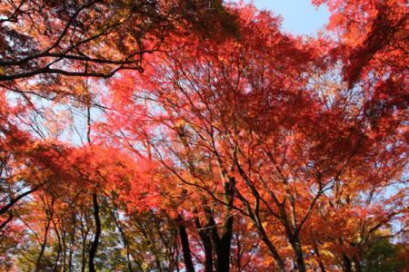 佐久山の紅葉