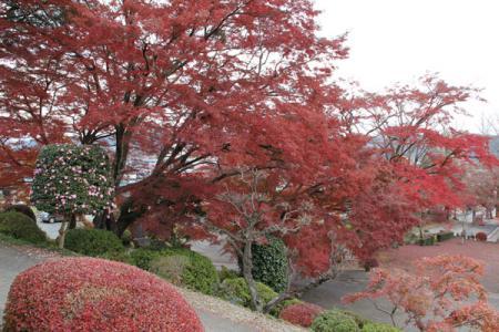 泉渓寺の秋