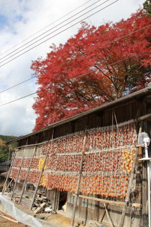 須賀川の吊るし柿