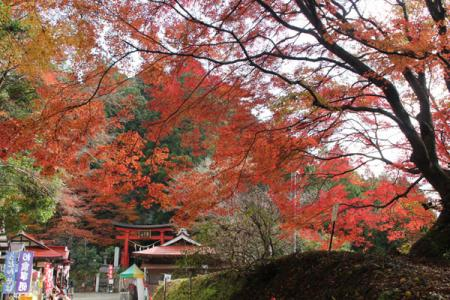 鷲子山上神社の秋