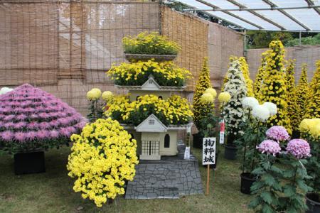 中央公園の菊花展