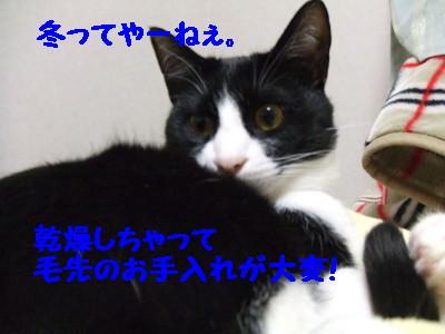DSCF0161.jpg