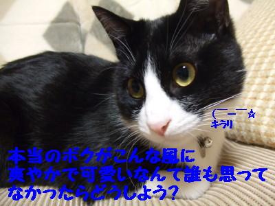 DSCF0511.jpg