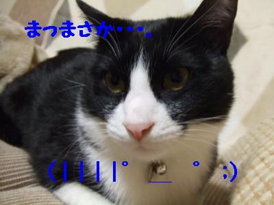 DSCF0522.jpg