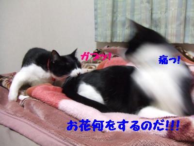 DSCF0688.jpg