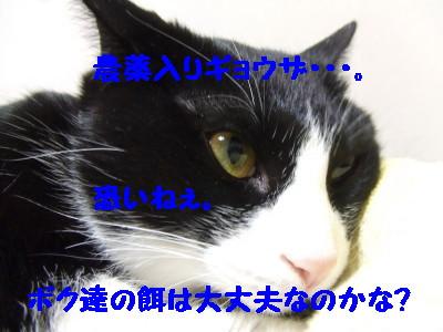 DSCF0712.jpg