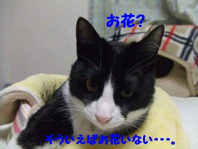 DSCF0790.jpg