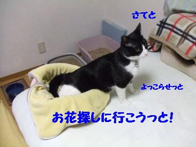 DSCF0829.jpg