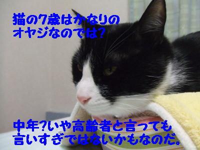 DSCF0964.jpg