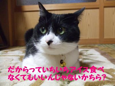 DSCF1831_20080310094749.jpg