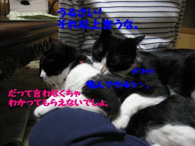 IMG_0076_20080110113657.jpg